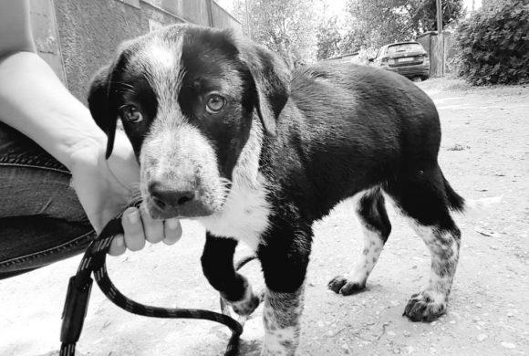 SOS: missione di salvataggio mamme e cuccioli