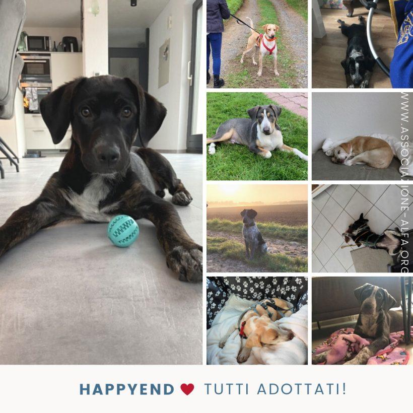 Happyend per Sarabi, Giuly e i loro 9 cuccioli, ma l'emergenza continua!