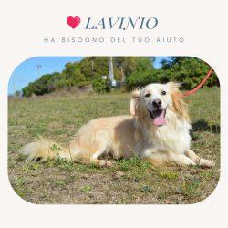 Raccolta fondi per Lavinio