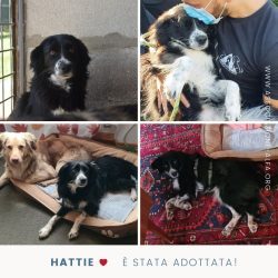 Hattie e il suo lieto fine