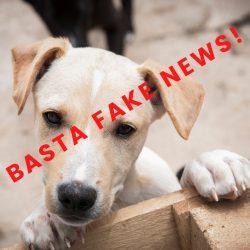 Adozioni in Germania: sfatiamo le fake news!
